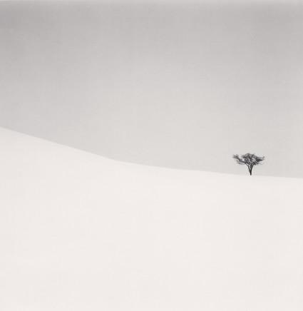 Michael Kenna, Single Tree, Mita, Hokkaido, Japan, 2007