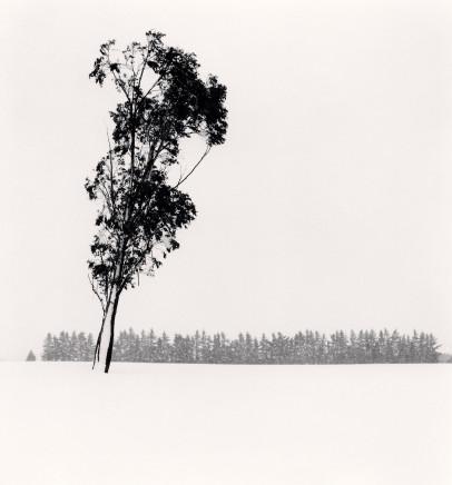 Michael Kenna, Leaning Eucalyptus, Methven, Canterbury, New Zealand, 2013