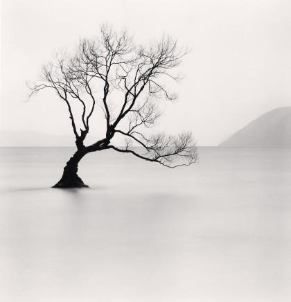 Michael Kenna, Wanaka Lake Tree, Study 1, Otago, New Zealand, 2013