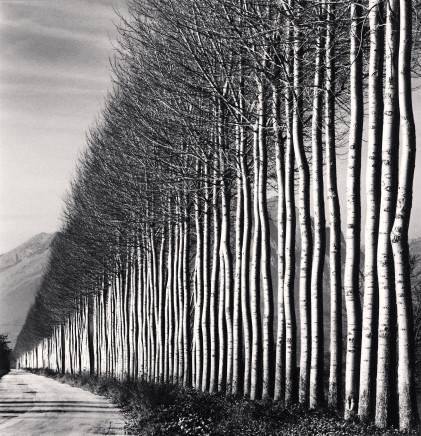 Michael Kenna, Poplar Trees, Fucino, Abruzzo, 2016