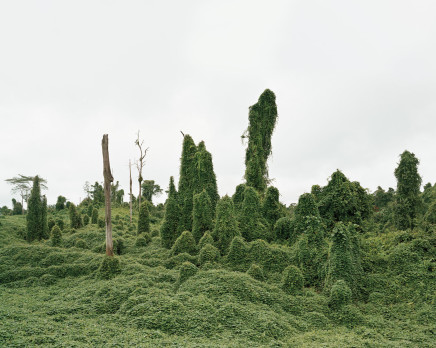 Olaf Otto Becker, Ghost Trees after deforestation, Malaysia, 2012