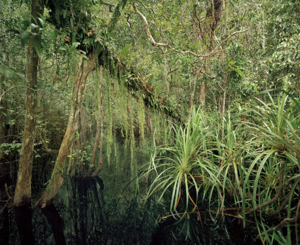 Olaf Otto Becker, PRIMARY SWAMP FOREST 04, BLACK WATER, SOUTH KALIMANTAN, INDONESIA, 2012