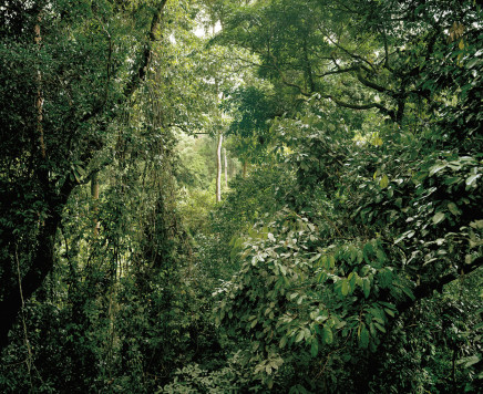 Olaf Otto Becker, PRIMARY FOREST 08, CANOPY, MALAYSIA, 2012
