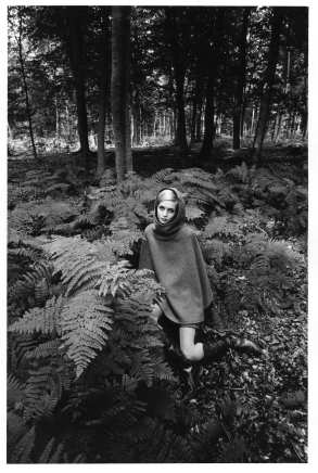 Jeanloup Sieff, Twiggy in the ferns, 1964