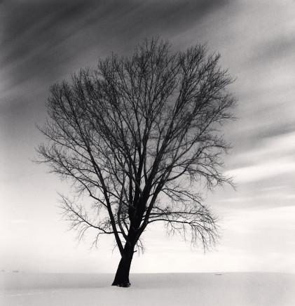 Michael Kenna, Philosopher's Tree, Study 2, Biei, Hokkaido, Japan, 2009