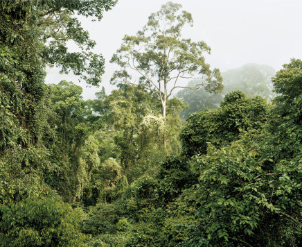 Olaf Otto Becker, PRIMARY FOREST 07, MALAYSIA, 2012