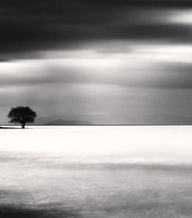 Michael Kenna, Biwa Lake Tree, Study 5, Omi, Honshu, Japan, 2012