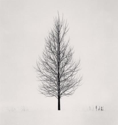 Michael Kenna, Tree Portrait, Study 5, Wakoto, Hokkaido, Japan, 2005