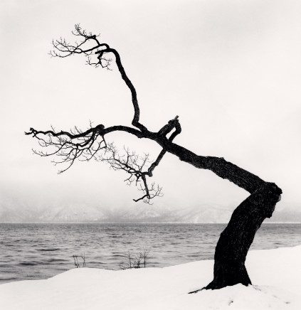 Michael Kenna, Kussharo Lake Tree, Study 15, Kotan, Hokkaido, Japan, 2009