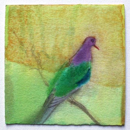 Claire Harkess, Emerald Dove