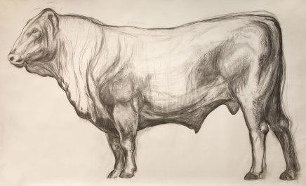 Helen Denerley, Bull drawing, 2019