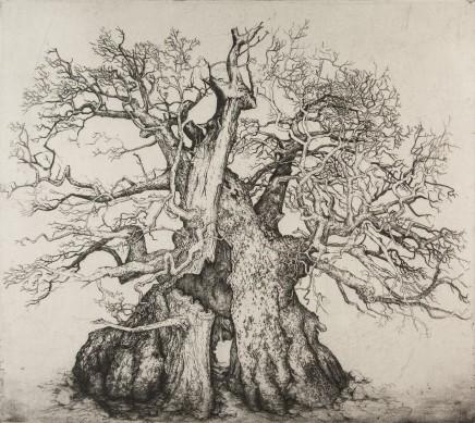 Ian Westacott, Rumskulla Oak - Offering