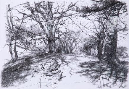 Paul Reid, Tree Study ii, 2018