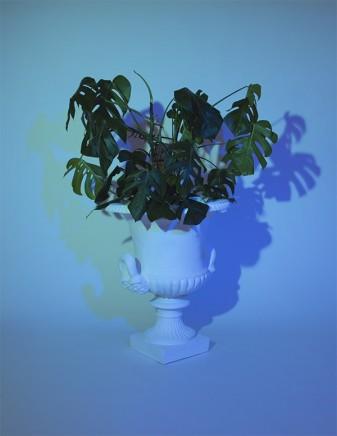 Mathew Tom, Plant I, 2014
