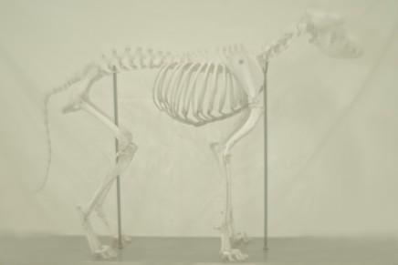 Daniel Malva, Canis lupus familiaris, 2009