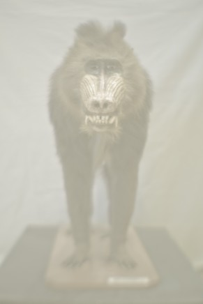 Daniel Malva, Madrillus sphinx, 2013
