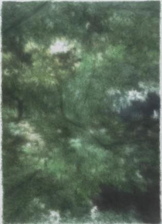 KANG Haitao 康海涛, Bushes 树丛, 2015-2016