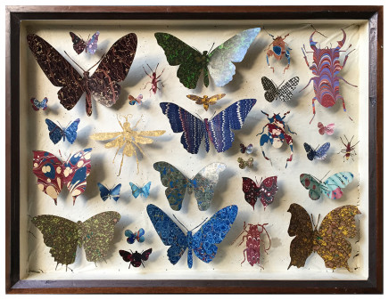 Helen Ward, Entomology Case 11, 2019