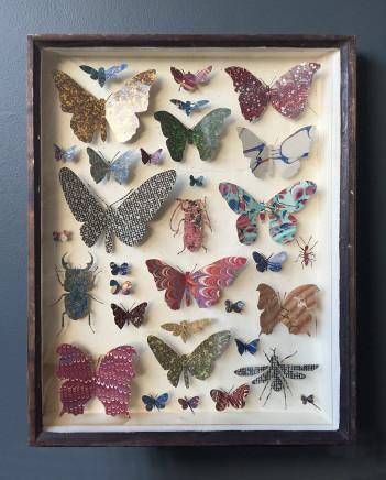 Helen Ward, Entomology Case 8, 2019