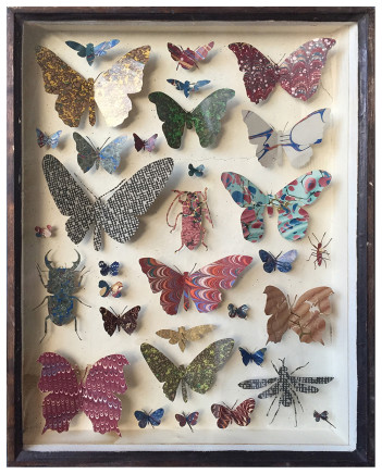 Helen Ward, Entomology Case 8, 2019
