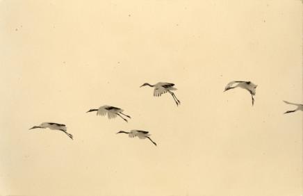 Yamamoto Masao, # 1171, 1987-2018
