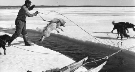Richard Harrington, Untitled [Dog jumping over break in ice], circa 1950