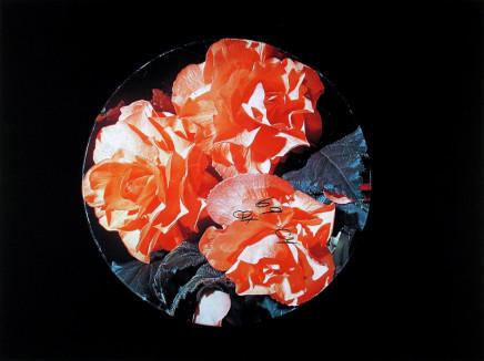 William Eakin, Night Garden 11, 2001