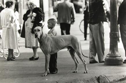 George S. Zimbel, Black Boy and Great Dane, Harlem, 1964