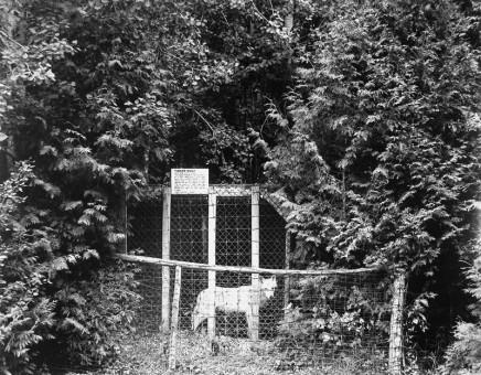 Volker Seding, Timber Wolf, Elmvale, Ontario, 1985