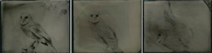 Deanna Pizzitelli, Owl (I, II, III), 2014