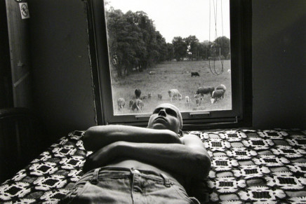 Larry Towell, Moses and Cows, Lambton County, Ontario, Canada, 1995