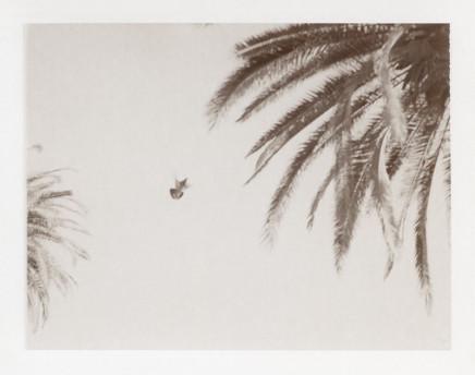 Deanna Pizzitelli, Birds II, 2012