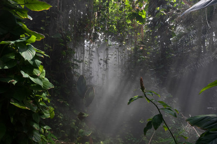 Dana Fritz, Rain Forest Mist, Biosphere 2, 2007