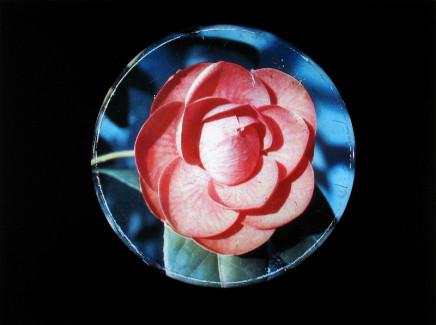 William Eakin, Night Garden 2, 2001