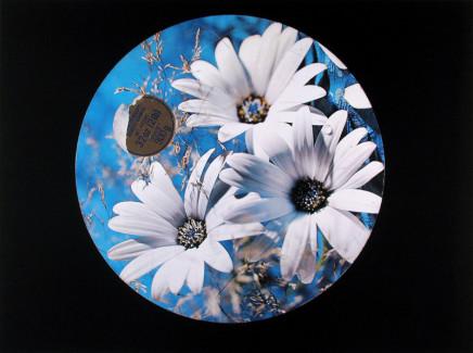 William Eakin, Night Garden 4, 2001