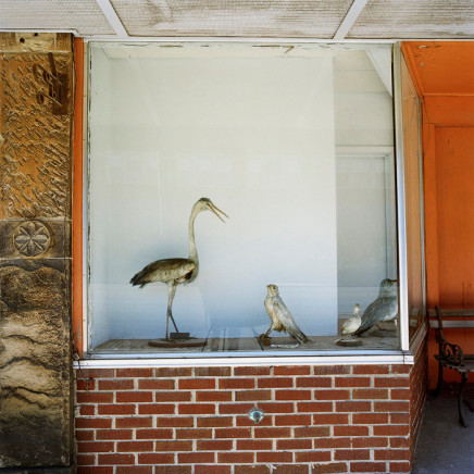 Phil Bergerson, Untitled, Antwerp, Ohio [melancholic bird], 2007