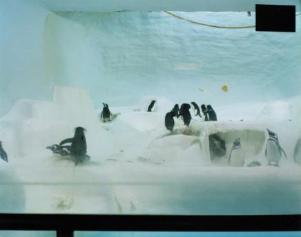 Volker Seding, Baby Rockhopper Penguins, Cincinnati, 1995