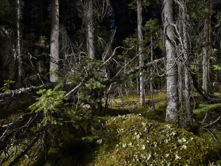 Rita Leistner, The Tree Planters–Enchanted Forest #06, 2018