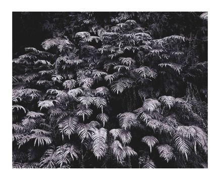 Andrew Drummond, Ferns, 2006