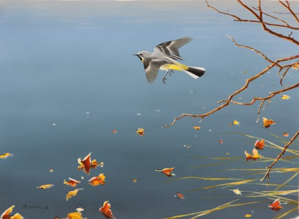 Rodger Mcphail, GREY WAGTAIL