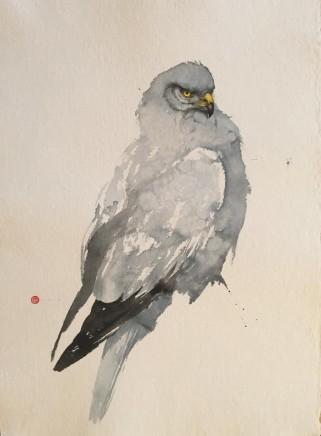 "Karl Martens Born 1956MARSH HARRIER Watercolour 30"" x 22"""