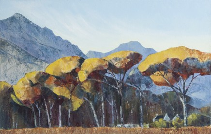 "Frederike Stokhuyzen Born 1938PINE TREES - FRANSCHHOEK - W.CAPE Oil on canvas 15.5"" X 24"""