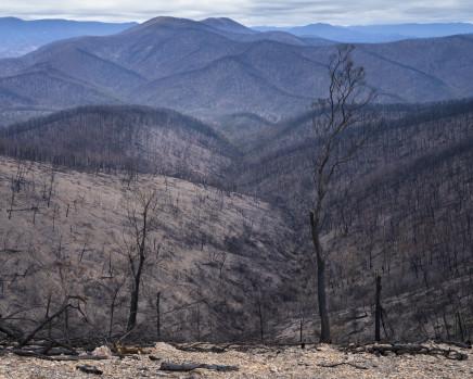 Gideon Mendel, The devastated Wadbilliga National Park. New South Wales, 2020
