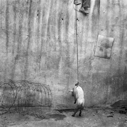 Roger Ballen, HANGING PIG, 2001