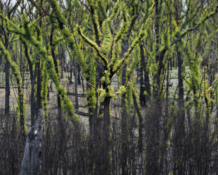 Gideon Mendel, New growth after the fires. Genoa, Victoria, 2020