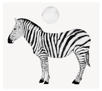 Beatrice Forshall, Zebra