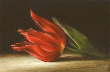 Tanja Moderscheim, Dutch heritage tulip: Duc v Tol Max Cramoisi 1700