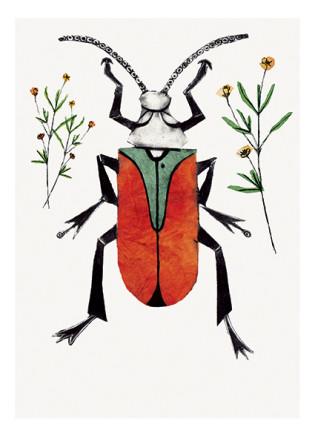 Beatrice Forshall, Scarlet Malachite Beetle