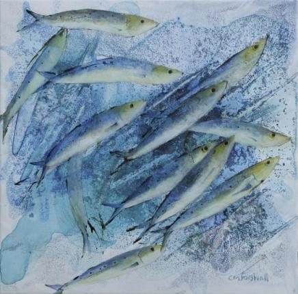 Catherine Forshall, Cornish Pilchards