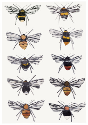 Beatrice Forshall, British Bumblebees